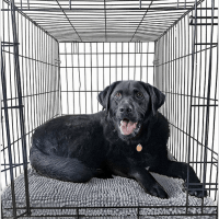 Soggy Doggy Crate Mate